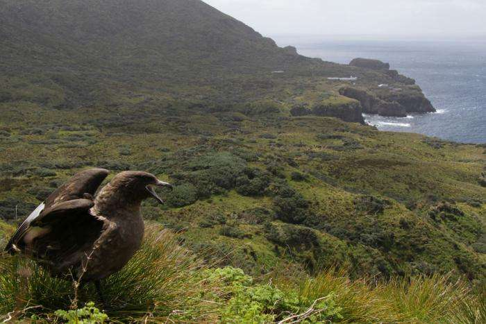 Seed conservation in the remote South Atlantic
