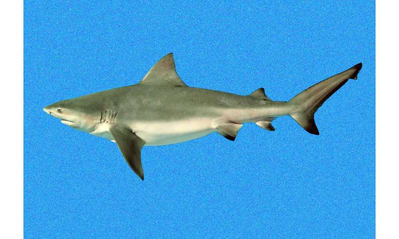 Shark scavenging helps reveal clues about human remains