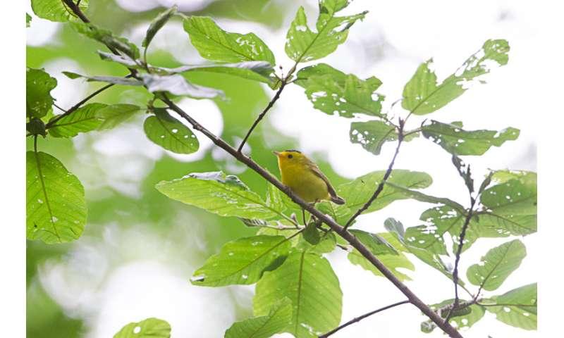 Songbirds divorce, flee, fail to reproduce due to suburban sprawl