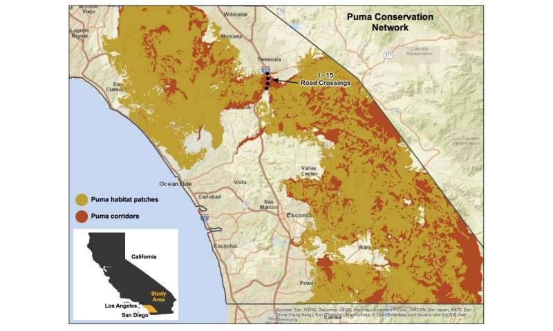 Southern California mountain lions' genetic connectivity dangerously low
