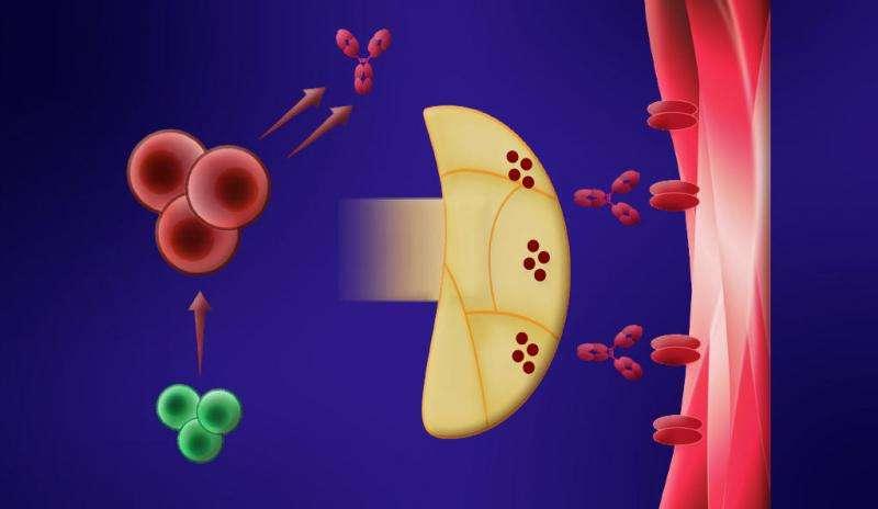 Study explains why myasthenia patients relapse after treatment