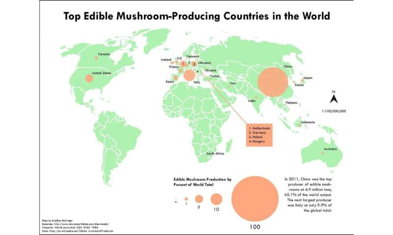 The amazing diversity – and possible decline – of mushrooms and other fungi
