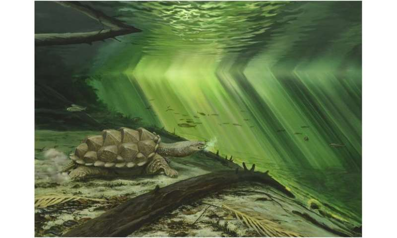 Morphological Evolution of the Turtle Shell and its Mechanical Implications, Part 2: Theoretical