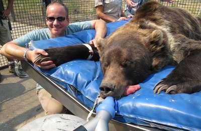 Vet med experts help solve a grizzly dental problem