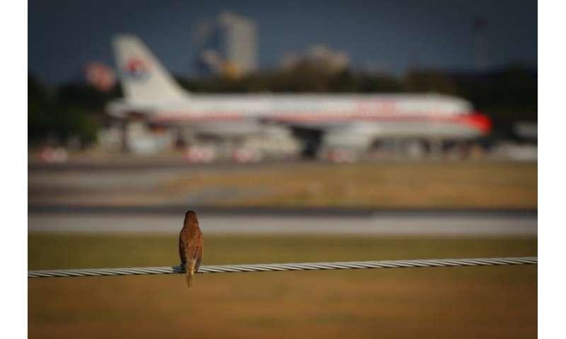 What happens when a bird strikes a plane?