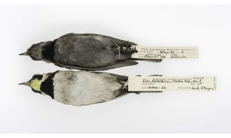 What soot-covered, hundred-year-old birds can tell us about saving the environment