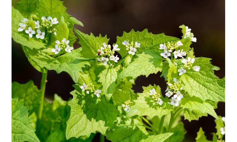 Climate change puts invasive plants on the move