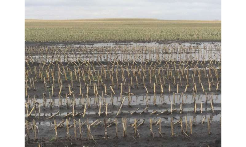 New study finds timing is key in keeping organic matter in wet soils