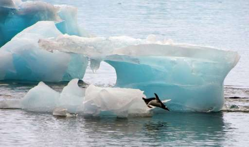 Climate change is a particular threat to penguins, with melting and shifting sea ice reducing habitats and warming seas affectin