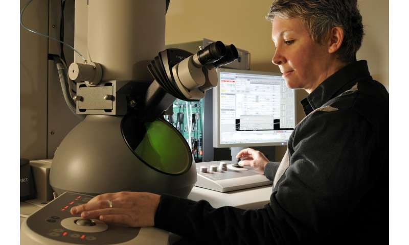 Researchers discover how breast cancer mutation in BRCA1 causes protein to self-destruct