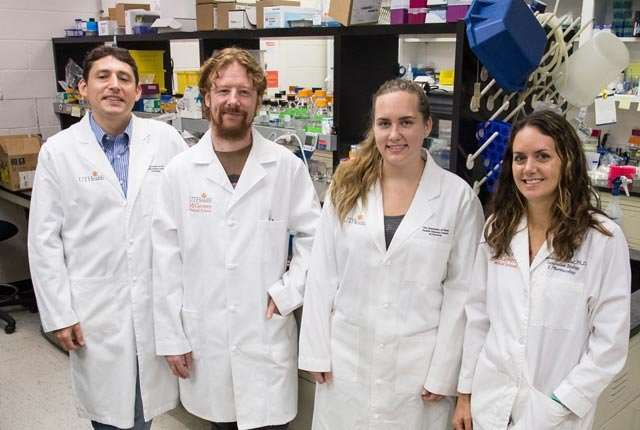 Researchers report findings on the effects of fat on stem cells