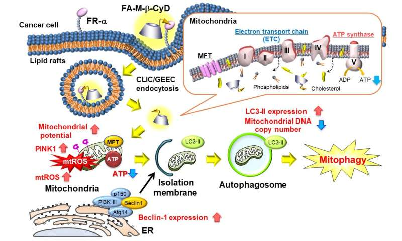 Mitochondria targeting anti-tumor compound
