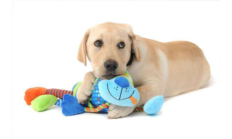New tool helps pick puppies most suited to guide dog training