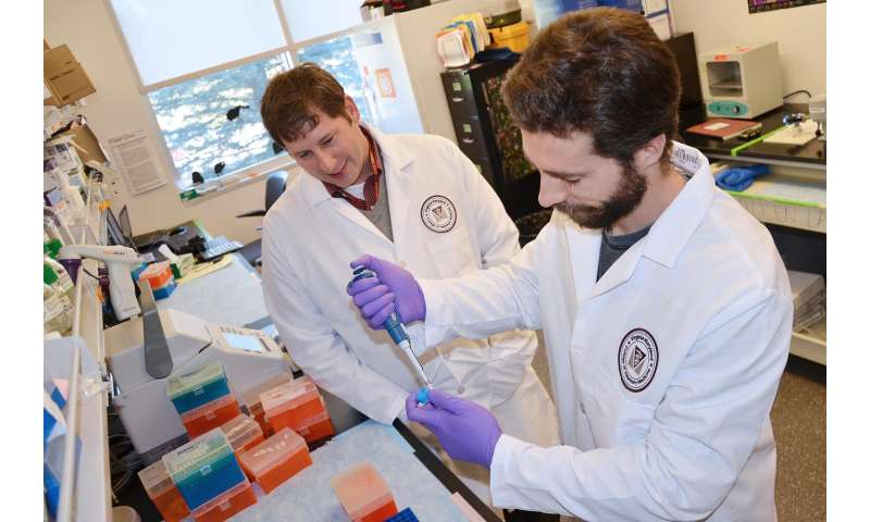 Researchers help the body protect itself against inflammation and colon cancer