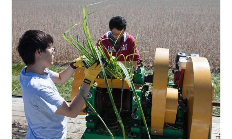 Scientists engineer sugarcane to produce biodiesel, more sugar for ethanol