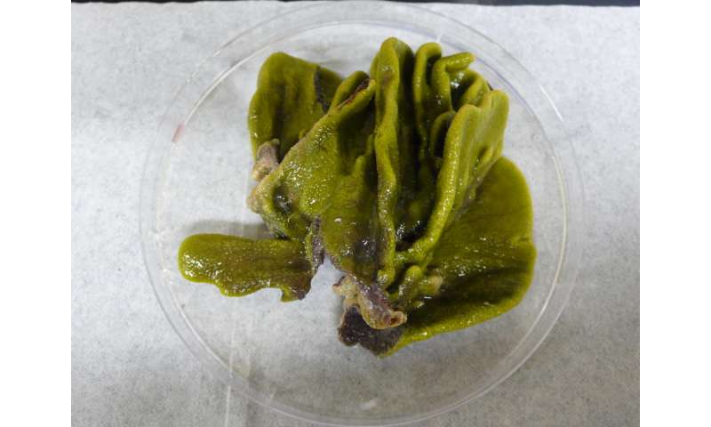 Study finds bacteria in marine sponge produce toxic flame retardant-like compounds