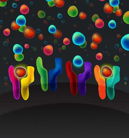 Understanding the language of cellular communication