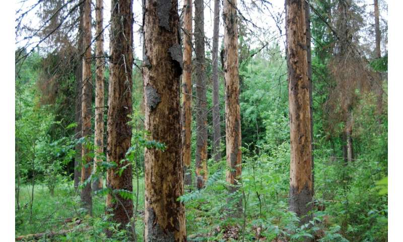 Climate change can alter the impact of forest pathogens in trees