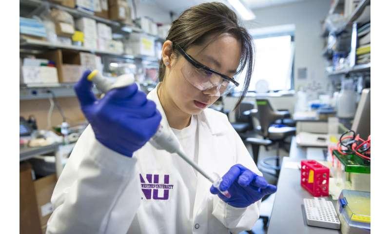 Understanding key enzyme's role in embryonic development