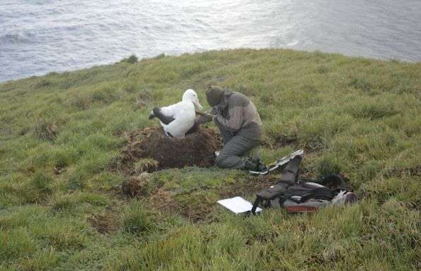 Study reveals albatross interactions with fishing vessels in the southern ocean