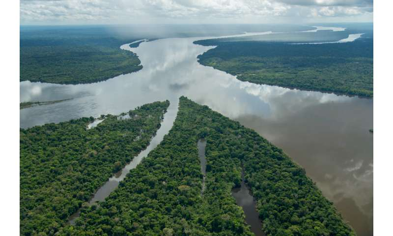 381 new species discovered in the Amazon