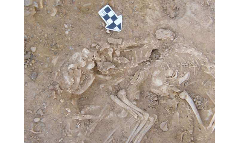Ancient DNA reveals role of Near East and Egypt in cat domestication