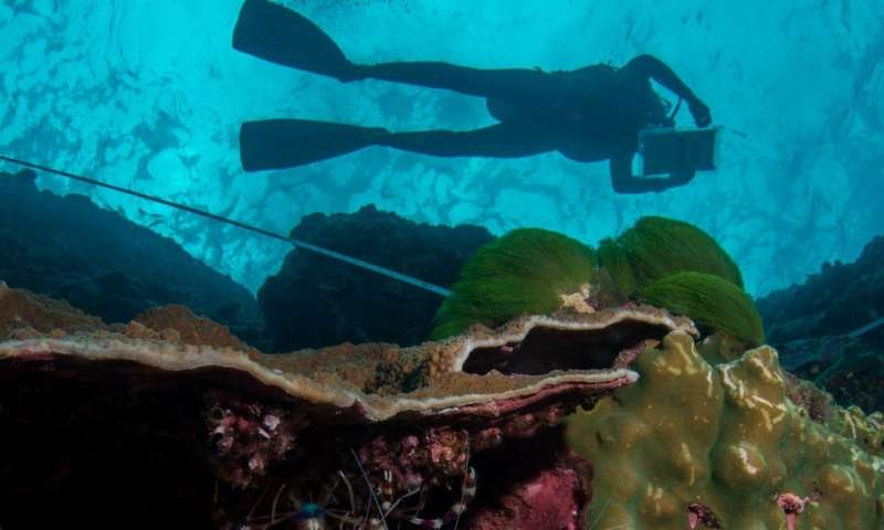 Citizen scientist scuba divers shed light on the impact of warming oceans on marine life