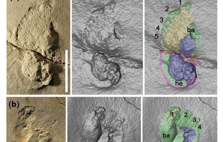 Controversial footprint discovery suggests human-like creatures may have roamed Crete nearly 6m yearsago