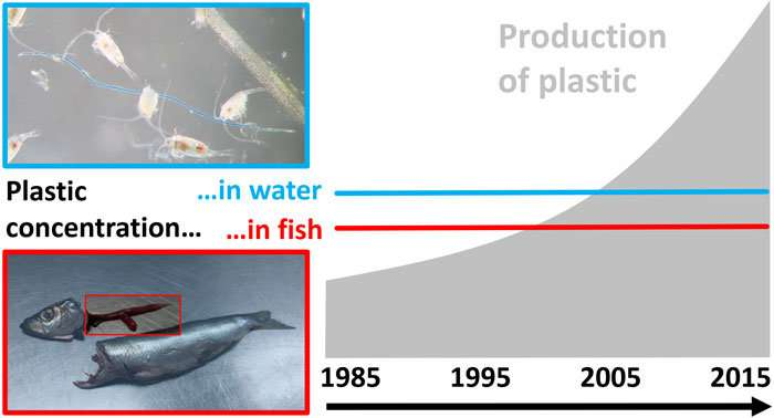 Microplastics in the Baltic have not risen for 30 years