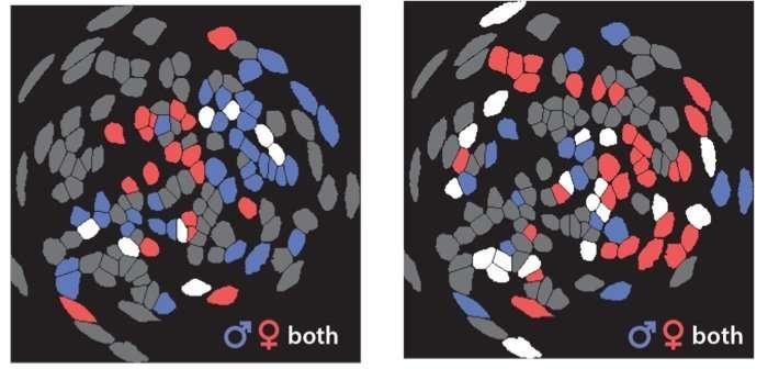 Mini-microscopes reveal brain circuitry behind social behavior