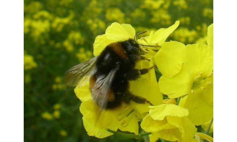 Neonicotinoid pesticide reduces egg development in wild bumblebee queens