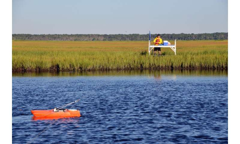 New technique quickly predicts salt marsh vulnerability