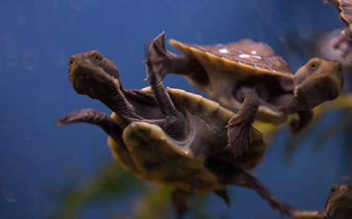 November weather spells a troublesome time for turtles