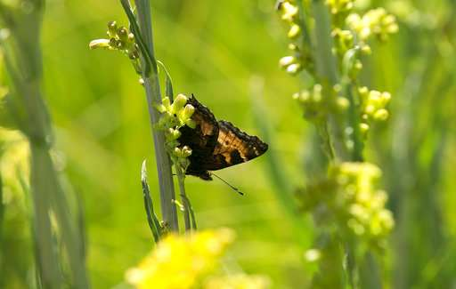 Rare birds, wildflowers: 'Secret garden' opens after century