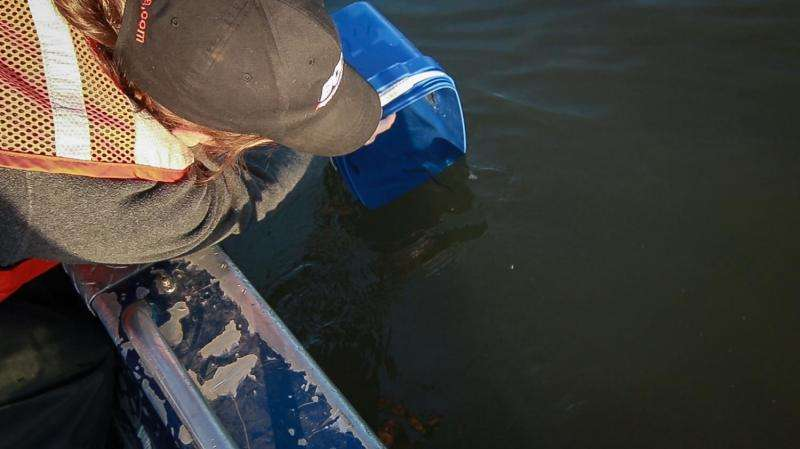 Scientists study under-appreciated fish with special tag