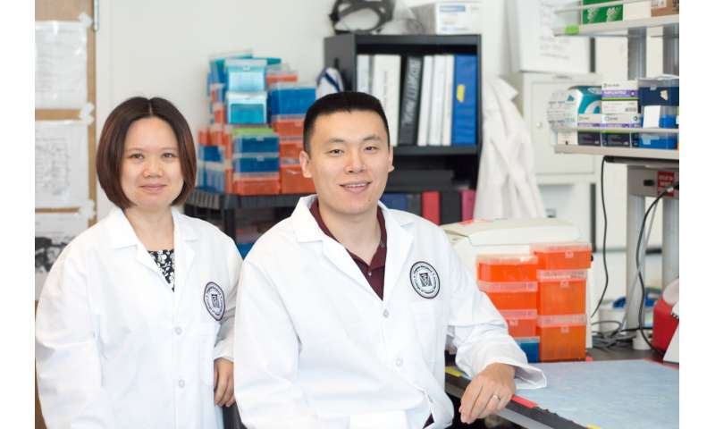 Virginia Tech study finds that healthy bacteria in yogurt may reduce lupus symptoms in mice