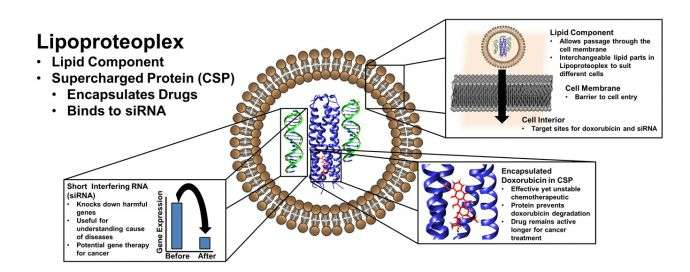 Researchers create biomaterial that delivers both a powerful drug and gene silencers