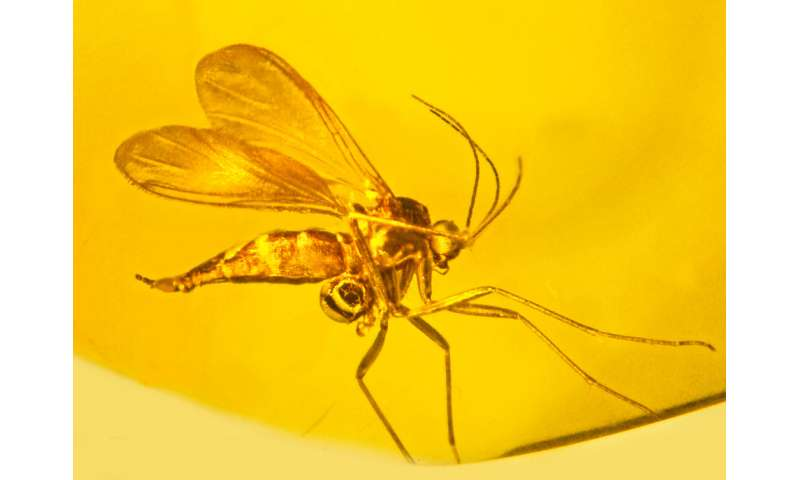 Researchers identify evidence of oldest orchid fossil on record