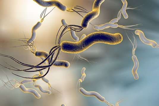 Genetic variability Helicobacter pylori of complicates efforts to develop a vaccine