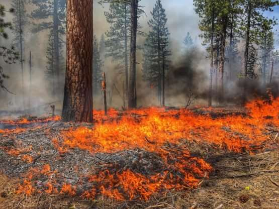 More frequent fires reduce soil carbon and fertility, slowing the regrowth of plants