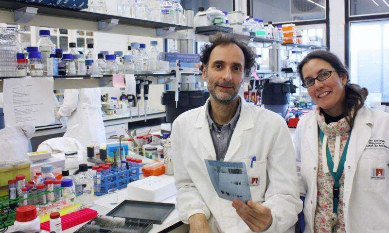 New research points to potential treatment for memory loss activating a protein dysregulated in dementia