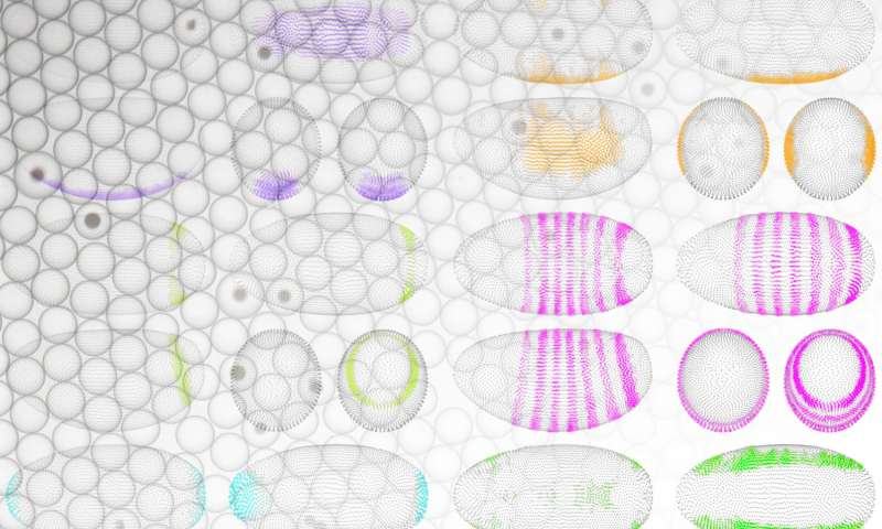 Reconstructing life at its beginning, cell by cell