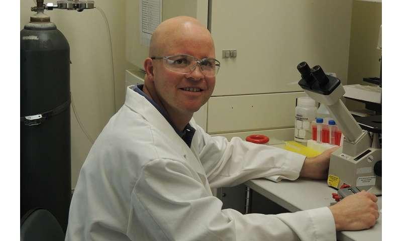SLU researcher draws bulls eye around muscular dystrophy drug targets