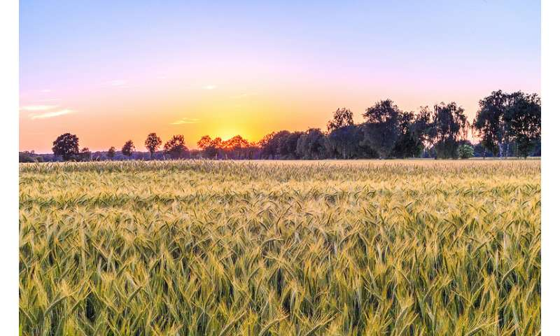 Study identifies ways to encourage 'refuge' planting, slowing resistance to Bt crops