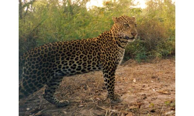 University of Montana research shows importance of remote cameras as biodiversity tools
