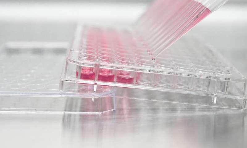 Researchers target undruggable cancers