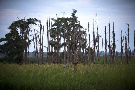 Climate change before your eyes: Seas rise and trees die