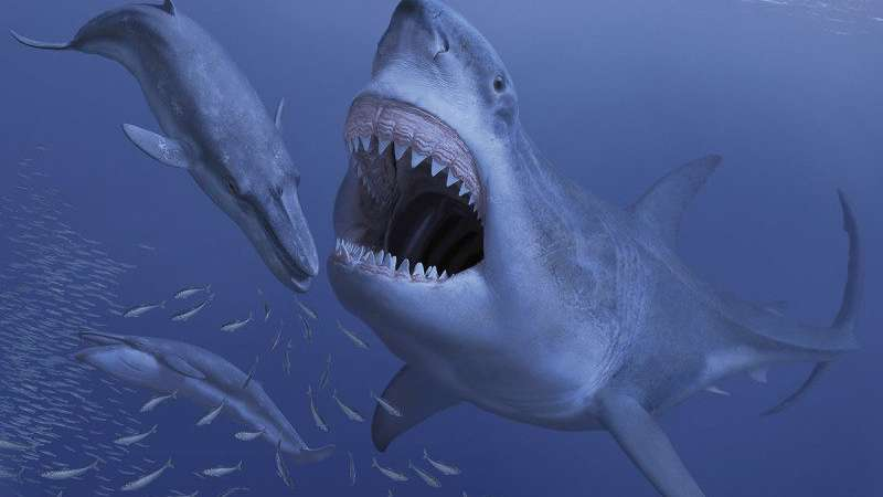 Giant ancient shark may have gone extinct due to extinction of its small prey