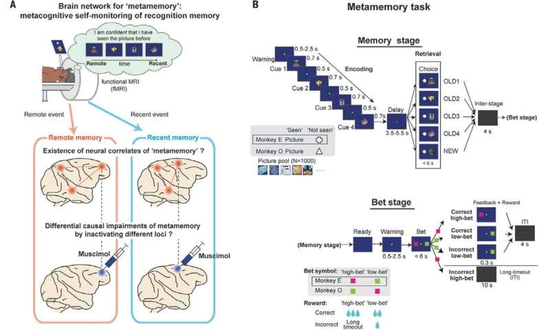 Study finds brain locale of metamemory in macaque monkeys