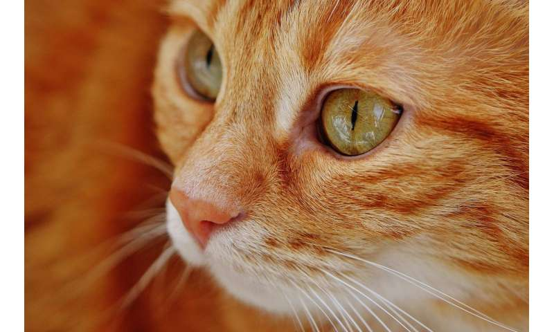rapid weight loss in older cats